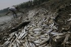 100,000 Kg of Poisoned Dead Fish in Chinese River